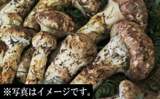【残りわずか】喬木村の秋の味覚『松茸』