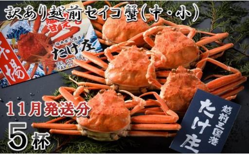 【11月発送分】訳あり越前セイコ蟹(中・小)5杯