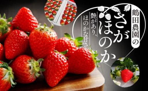 【伊万里市】各種イチゴの事前受付を開始しました!