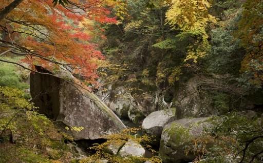 温泉にのんびり 奥出雲の紅葉を愉しもう!