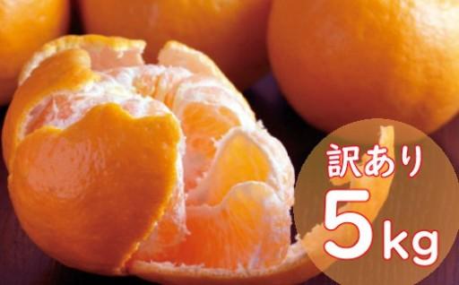 室戸の冬の柑橘【ポンカン】の受付開始!!!!!!