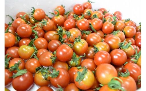 ピカピカの新鮮トマトを【はなまる農園】から直送!