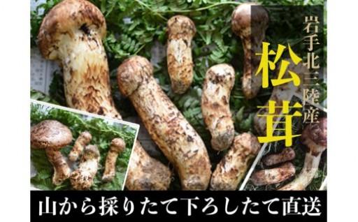 久慈地域産松茸今季最終受付は本日午後6時から!