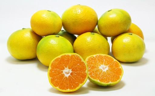柑橘の郷からお届け!ご家庭用早生みかん5kg