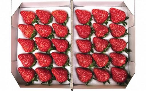 農水大臣賞受賞農園からお届けイチゴ大粒・紅ほっぺ