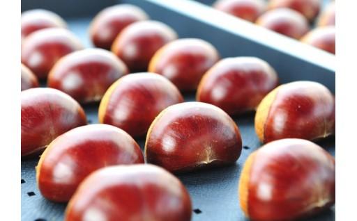 大粒で甘い「北摂栗」の受付は10月31日まで!