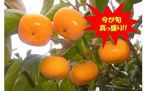 【庄内柿】今が旬です!!