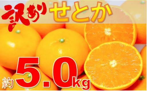 柑橘の大トロ!『訳ありせとか5㎏』が7千円で登場