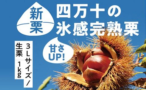 【100個限定】甘さUP!四万十の氷感熟成栗