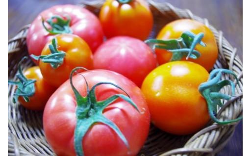 人気レストランも認めたあのトマト・・・