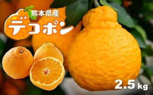 熊本県産デコポンが登場!