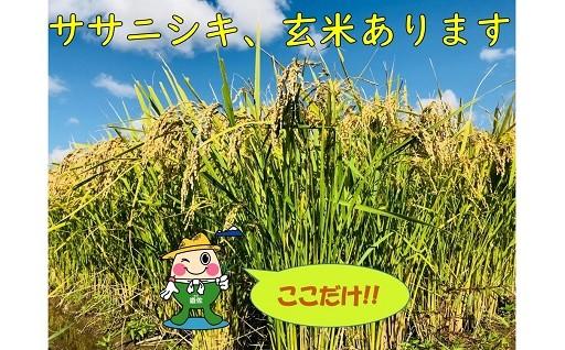 ササニシキ、玄米をお探しの方へ朗報です!!