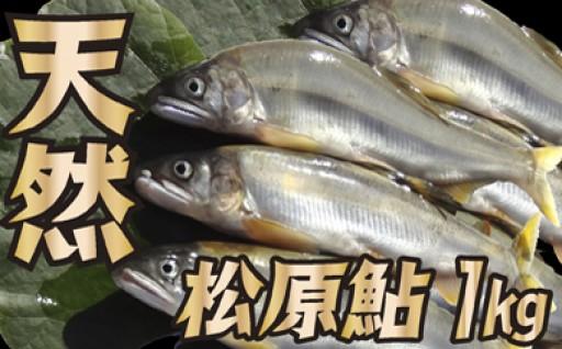 山形県小国川 【天然】 松原鮎