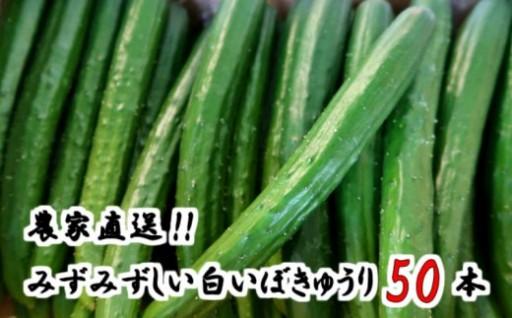 名産地の農家直送!みずみずしいきゅうり50本!!