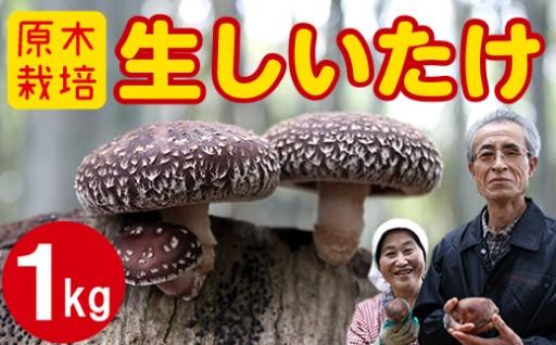 加藤さんちの【原木栽培しいたけ】1kg受付開始!