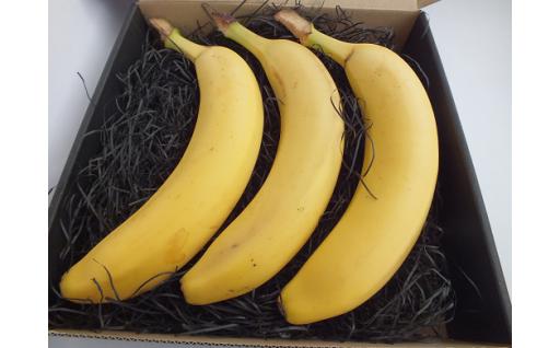 【新登場!】雪国バナナギフト3本セット