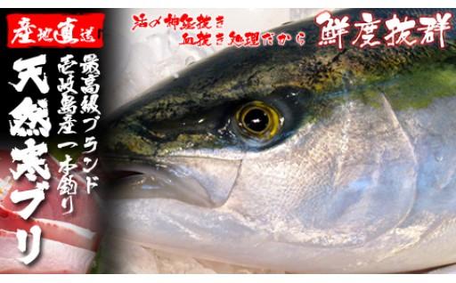 【豊富なレパートリー】壱岐島産天然寒ブリ
