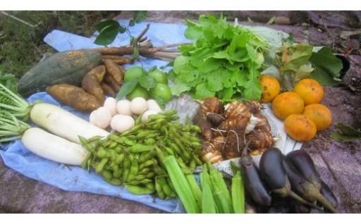 中村自然農園の有機無農薬季節の野菜をお届け♪
