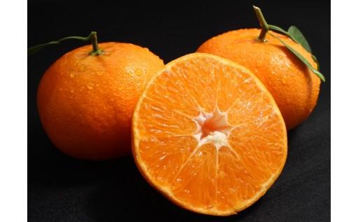 愛媛県愛南の高級柑橘「甘平」