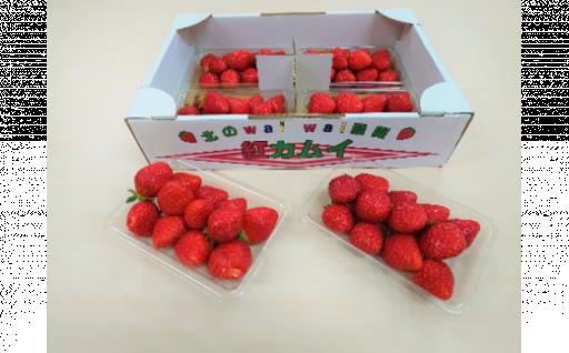 【期間限定】希少!浜頓別産イチゴ『紅カムイ』