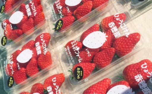赤穂市産イチゴ 200g×4パック
