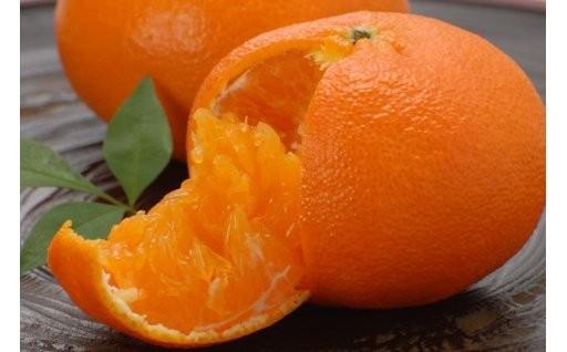 大人気の甘平、せとか、その他柑橘類の受付開始!
