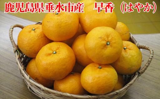 鹿児島県垂水市産 早香(はやか)5kg