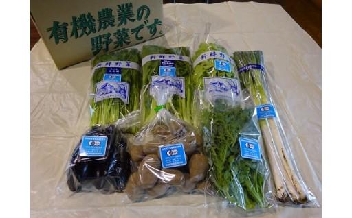 限定30セット!有機野菜のオーナー便が受付開始!