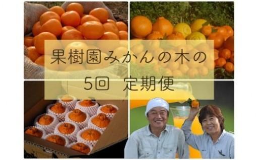 「果樹園みかんの木」のお楽しみ5回定期便コース