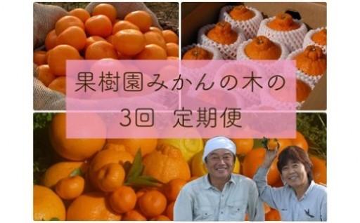「果樹園みかんの木」のお楽しみ3回定期便コース