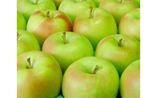 【11/16まで】りんご「ぐんま名月」受付中