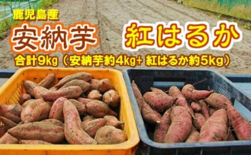 東串良の濃密安納芋と特選紅蜜芋紅はるかセット