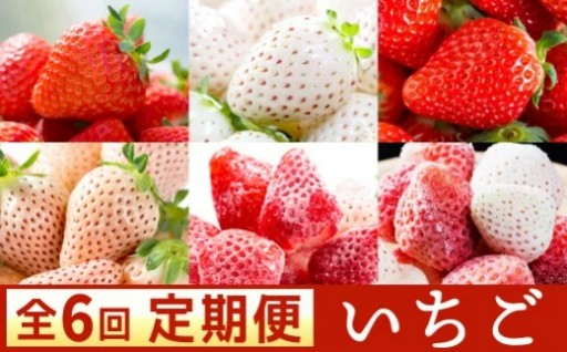 希少な白イチゴも!佐賀のいちごの定期便【全6回】