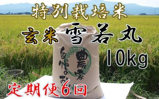 【玄米】特別栽培米 雪若丸10kg×6回