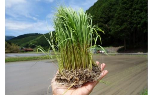 揖保川源流 繁盛米+桑の葉茶のセット