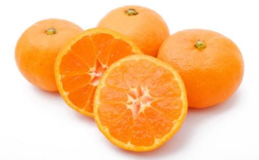 極早生 温州みかん 12kg みかん 柑橘