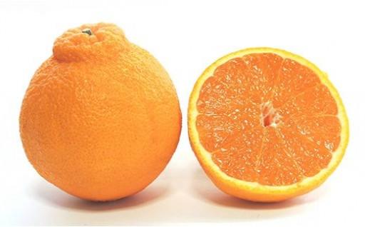 あまい柑橘!不知火3kg(8~10玉)化粧箱入り