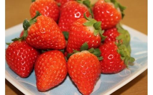 【伊万里市】各種イチゴの早期予約受付中です!