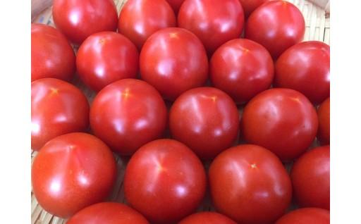 安全で安心、そしておいしい自慢のトマトをどうぞ!