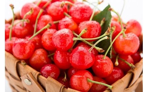 【上山】サクランボなど四季を通して選べる果物多数