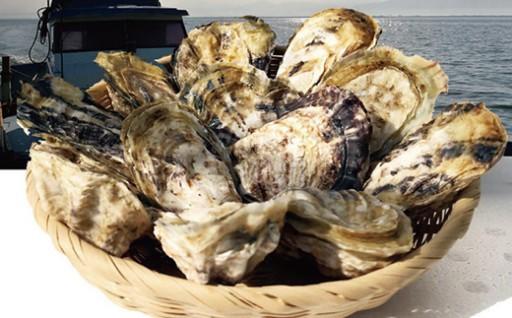 新鮮 男気 牡蠣 4kg 香港の料亭などにも提供