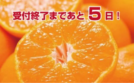 【12/10まで】ブランド有田みかん【数量限定】