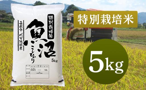 【特別栽培米】新潟県魚沼産コシヒカリが人気です!