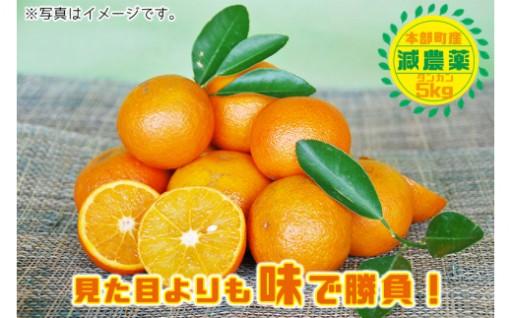 【減農薬】本部町産タンカンみかん(約5kg入り)