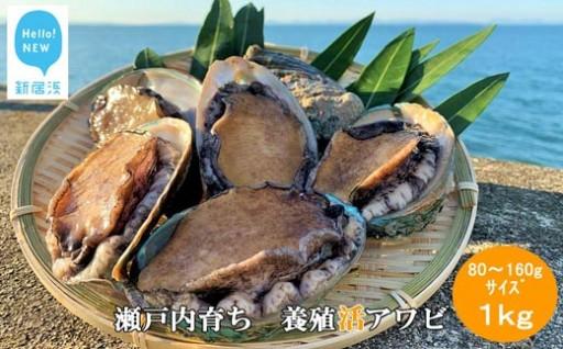【期間限定!】瀬戸内育ち 養殖活アワビ新登場!