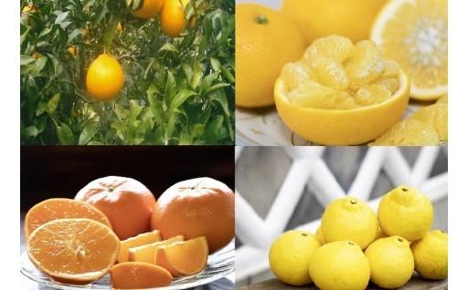 【限定】今が旬!柑橘類の申込み始まりました!