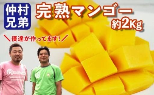 《コンテスト連続入賞》仲村兄弟のマンゴー2Kg