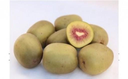 【申込再開】東村山産!甘くて美味しいフルーツ