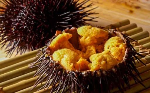 """【日本海の新鮮な""""赤ウニ""""を贅沢に食卓へ】"""