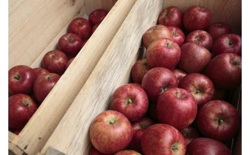 【つがる市】りんごの申込受付は12月31日まで